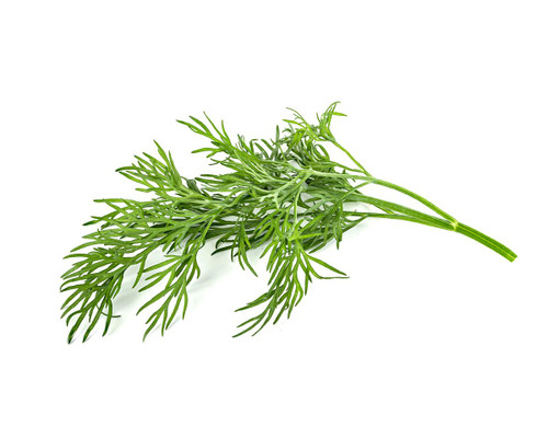 Click and Grow Dill Pod