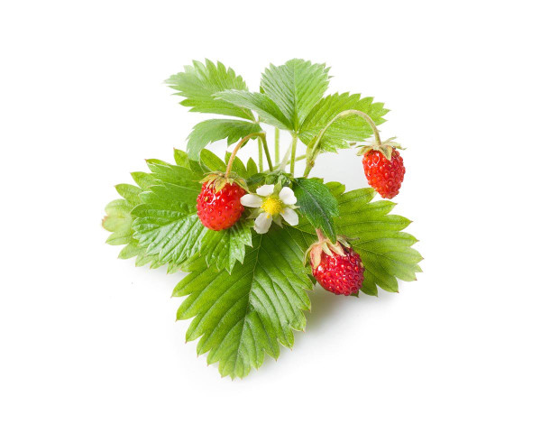 Click and Grow Wild Strawberry  Pods