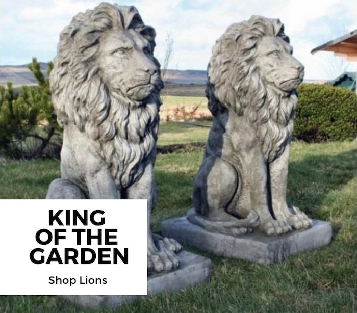 shop-lions-banner-graphic.png