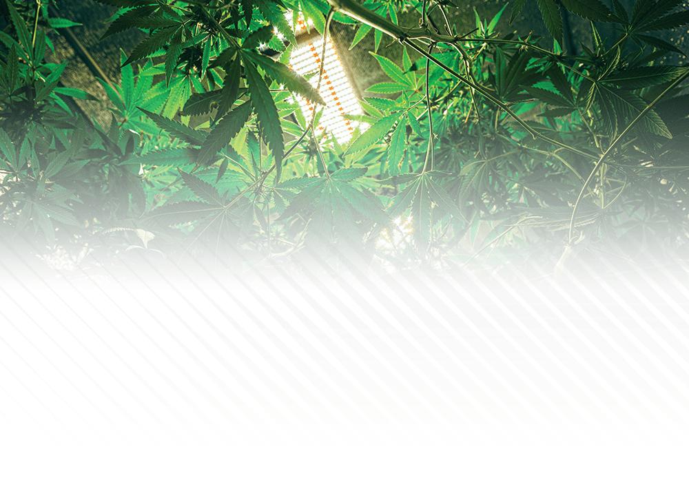 600W TERRA Linear LED Grow Light