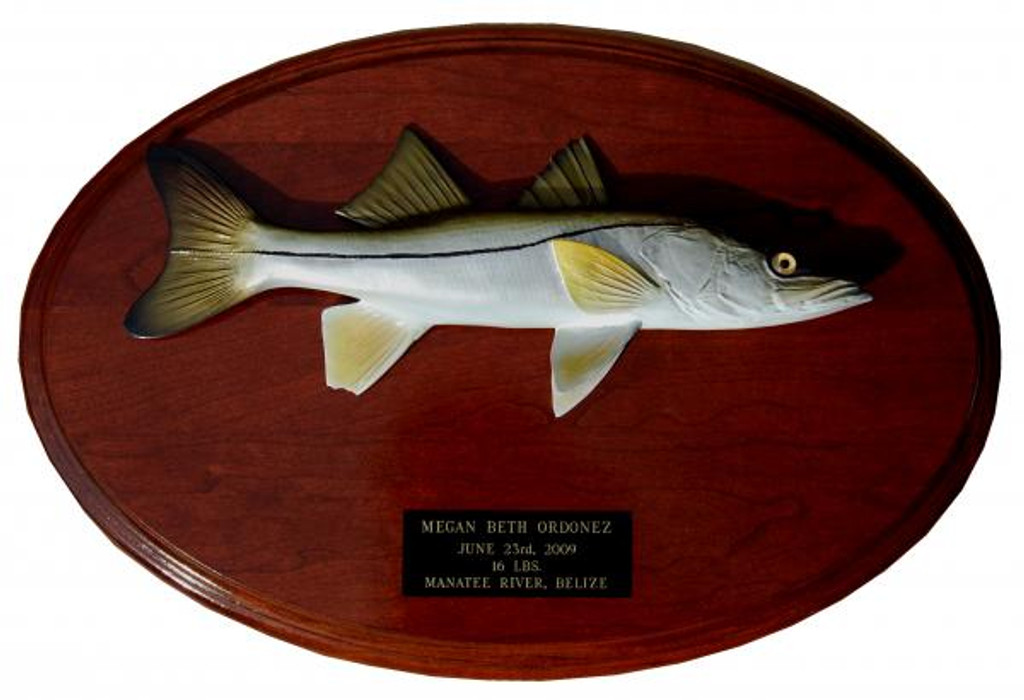 Snook Trophy Fish Mount