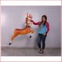 The design Poly-resin Funny Reindeer Hanging comes with a Santa's hat as well. A great compliment to any Christmas scene it will definitely add great Christmas cheer any event. Very popular for shopping centres to add a playful twist to their Christmas displays and can be hung directly from ceiling. Large Christmas decor at its best, our range of large Toy Soldiers or Nutcrackers would compliment this item beautifully. The Funny Reindeer Hanging is well loved by kids and adults alike as they adore his cute face and Christmas cheer.