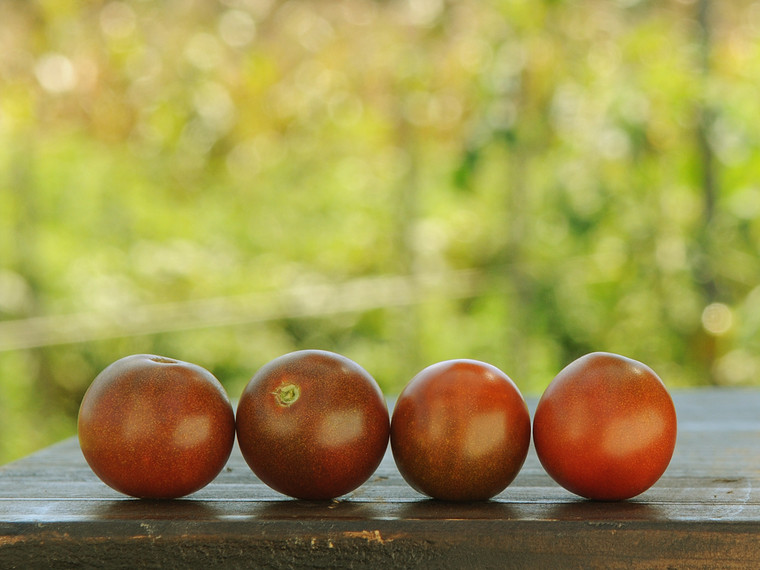 Brown Cherry