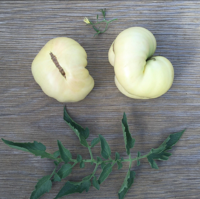 White Queen Heirloom tomato seeds