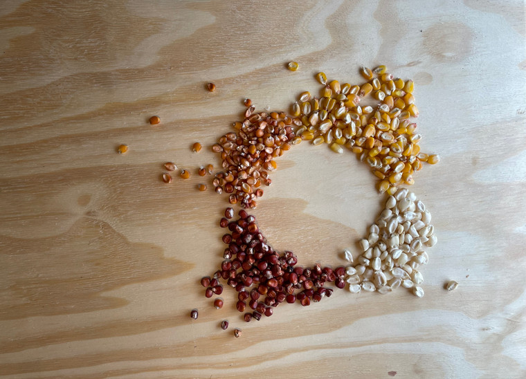 rare Italian maize seed collection