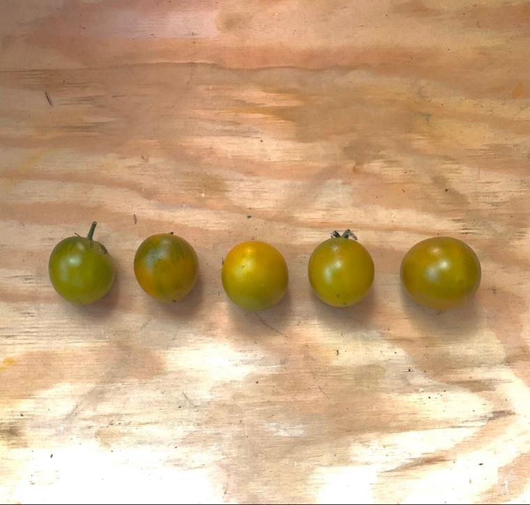 Emerald cherry Heirloom tomato seeds