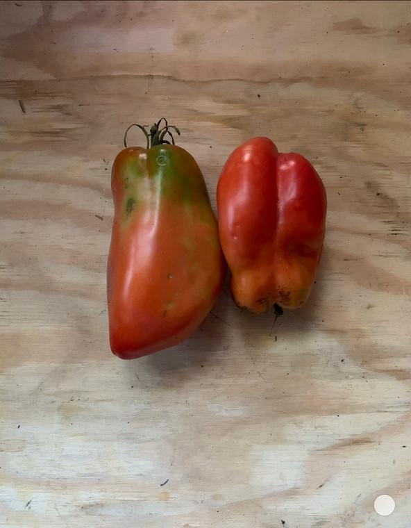 Des Andes heirloom tomato seeds