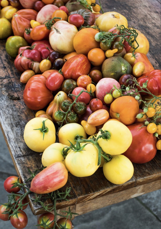 Tomato School 2022