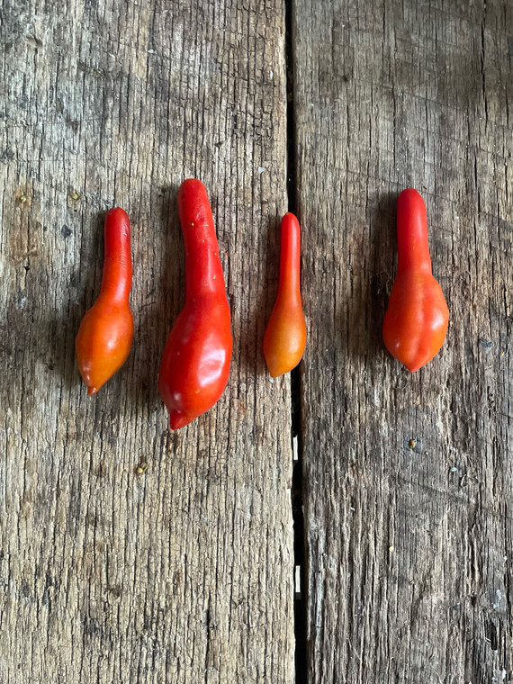 Bowling pin heirloom tomato seeds