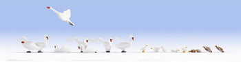 NOCH 15774 Swans & Ducks 00/HO