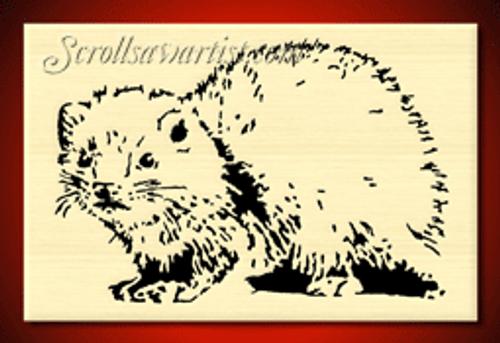Ferret  (AN004)