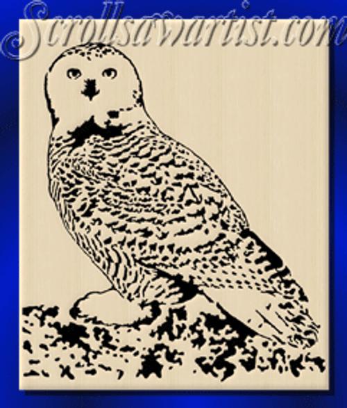 Snowy owl (BI019)