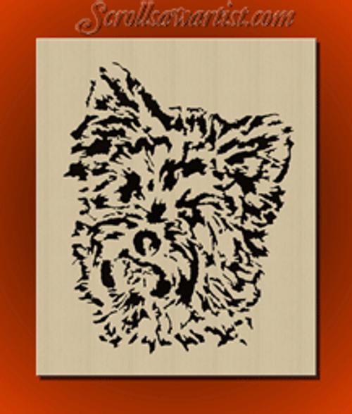 Yorkshire terrier (DO017)