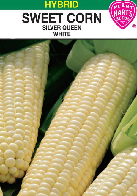 silver white sweet corn