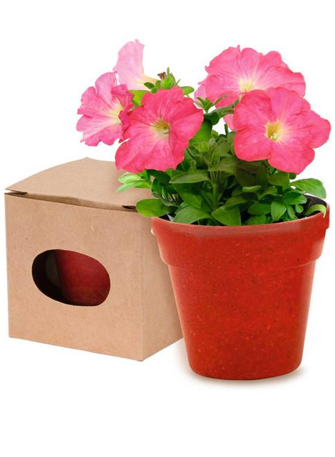 Petunia, ghiveci biodegradabil cu 5-8 seminte de petunie in diferite culori, cu posibilitate de personalizare corporate