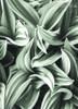 Cactus Leaves Botanical Modern Framed Portraiture Photo Canvas Print