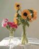 Glass Flowerpots Botanical Modern Framed Artwork Photograph Canvas Print