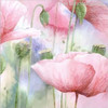 Watercolor Pink Poppy Flowers Painting Print