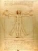The Vitruvian Man is a Drawing Print
