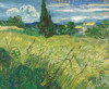 Field with Cypress Van Gogh Botanical Reproduction Framed Painting Picture Canvas Print