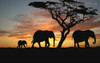 African Elephants Modern Landscape Picture Print