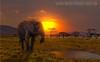 Sundown Africa Modern Landscape Photo Print