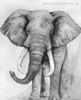 Jumbo Abstract Animal Contemporary Painting Print