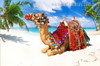Camel Nature Landscape Animal Beach Canvas Artwork Print