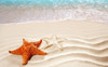 Star Fish Modern Seascape Animal Painting Picture Canvas Print