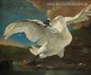 Threatened Swan Vintage Bird Mix Artists Painting Canvas Print