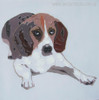 Beagle Abstract Animal Painting Canvas Print