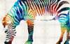 Hued Zebra Animal Abstract Modern Painting Canvas Print