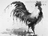 Cock Bird Animal Abstract Contemporary Painting Canvas Print