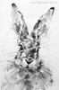 Rabbit Animal Abstract Contemporary Painting Canvas Print