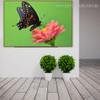 Eastern Black Swallowtail Animal Framed Modern Scheme Image Canvas Print for Room Wall Onlay