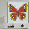 Eastern Comma Animal Framed Contemporary Smudge Picture Canvas Print for Room Wall Trimming