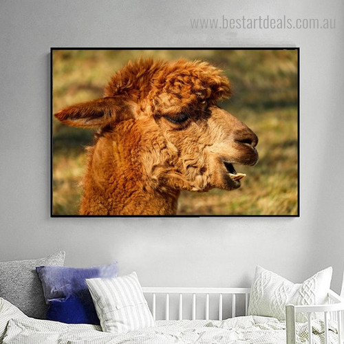 Alpaca Face Animal Contemporary Framed Painting Photo Canvas Print for Room Wall Flourish