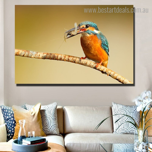Multicoloured Kingfisher Bird Nature Modern Framed Painting Photo Canvas Print for Room Wall Decor