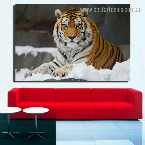 Jungly Tiger Animal Nature Modern Framed Painting Photo Canvas Print for Room Wall Drape