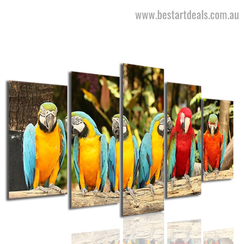 Colorful Parrot Group Bird Modern Artwork Photo Canvas Print for Room Wall Adornment