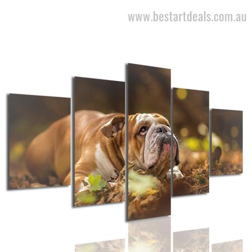 Bulldog Animal Modern Framed Effigy Image Canvas Print