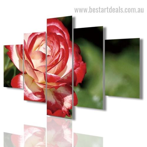 Red Carnation Blossom Botanical Modern Framed Portraiture Pic Canvas Print