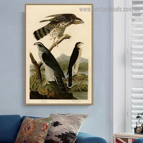 Goshawk Stanley Hawk John James Audubon Bird Landscape Ornithologist Reproduction Artwork Photo Canvas Print for Room Wall Ornament