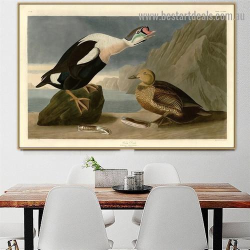 King Duck John James Audubon Bird Landscape Ornithologist Reproduction Artwork Picture Canvas Print for Room Wall Adornment