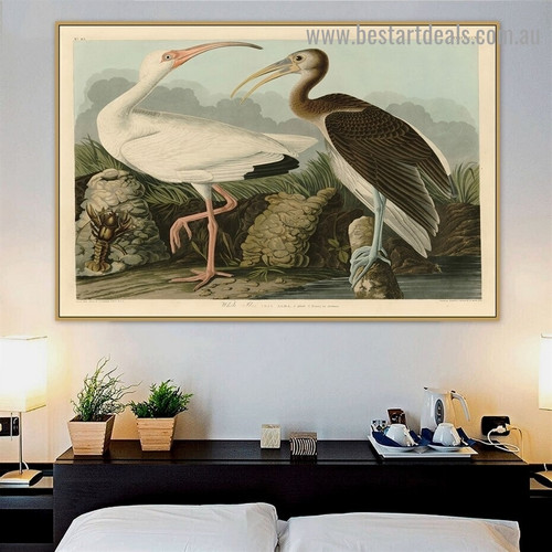 White Ibis John James Audubon Bird Landscape Ornithologist Reproduction Portrait Painting Canvas Print for Room Wall Adornment
