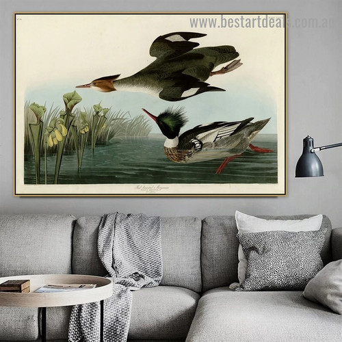 Red Breasted Merganser John James Audubon Bird Landscape Ornithologist Reproduction Portrait Painting Canvas Print for Room Wall Adornment