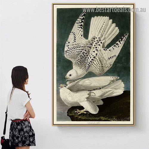 Iceland or Jer Falcon John James Audubon Bird Landscape Ornithologist Reproduction Artwork Photo Canvas Print for Room Wall Adornment