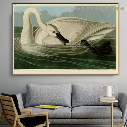 Trumpeter Swan John James Audubon Bird Landscape Ornithologist Reproduction Artwork Picture Canvas Print for Room Wall Adornment