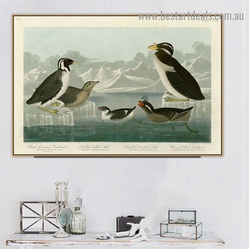 Black throated Guillemot John James Audubon Bird Landscape Ornithologist Reproduction Portrait Image Canvas Print for Room Wall Ornament