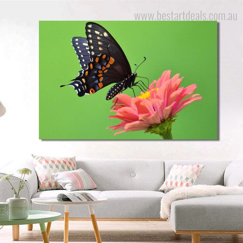 Eastern Black Swallowtail Animal Framed Modern Scheme Image Canvas Print for Lounge Room Wall Decor